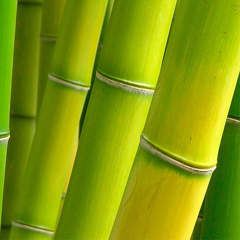 The colour green - colour psychology, brand design