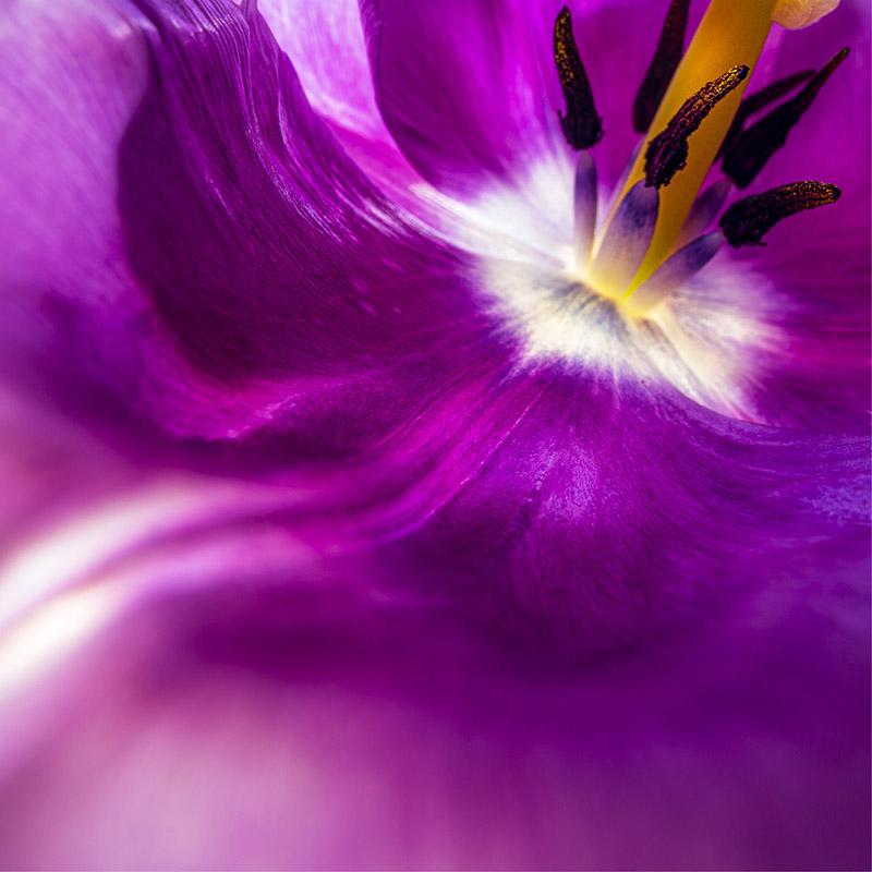The colour purple - colour psychology, brand design